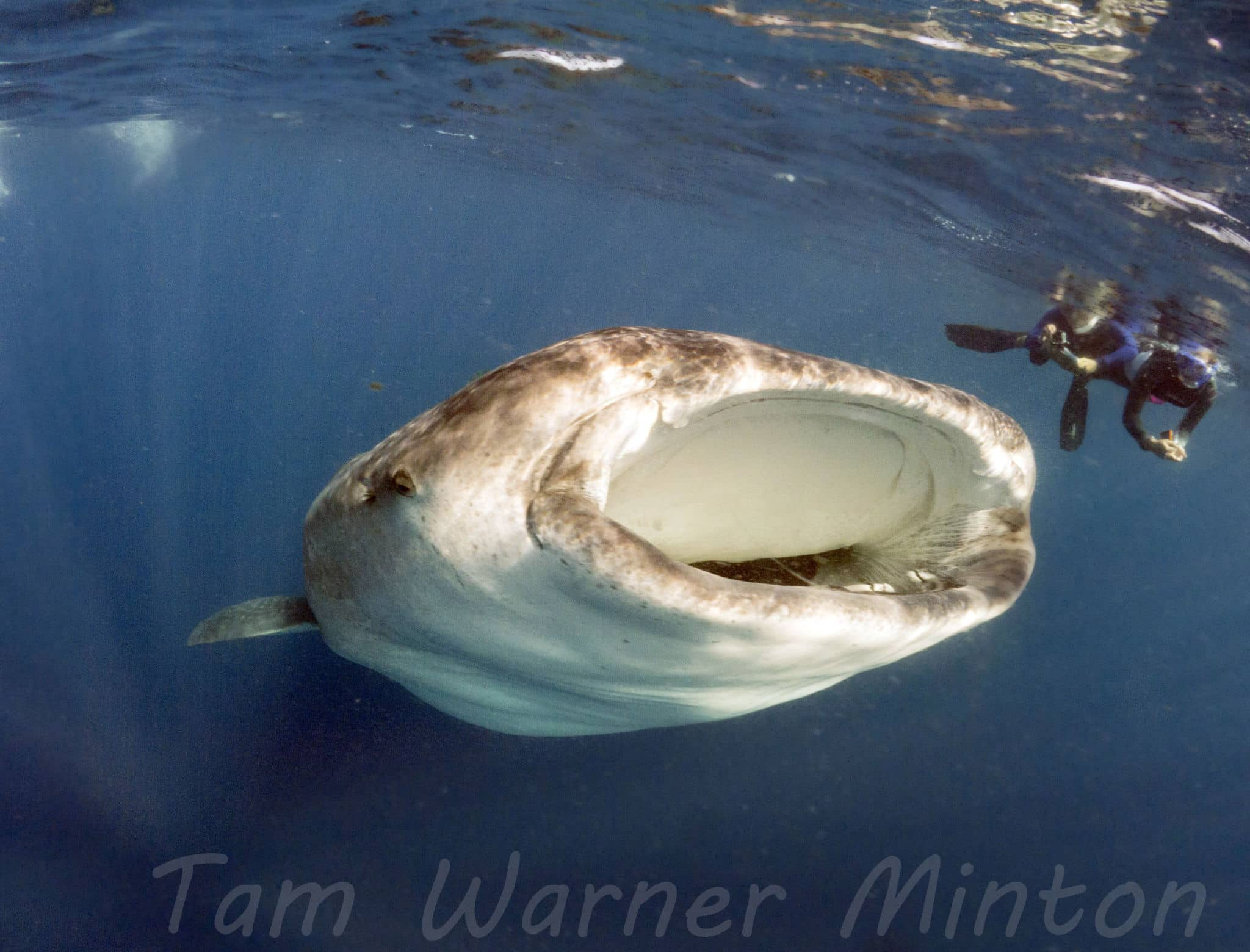 Fab Photos Friday: The Biggest Fish in the Ocean