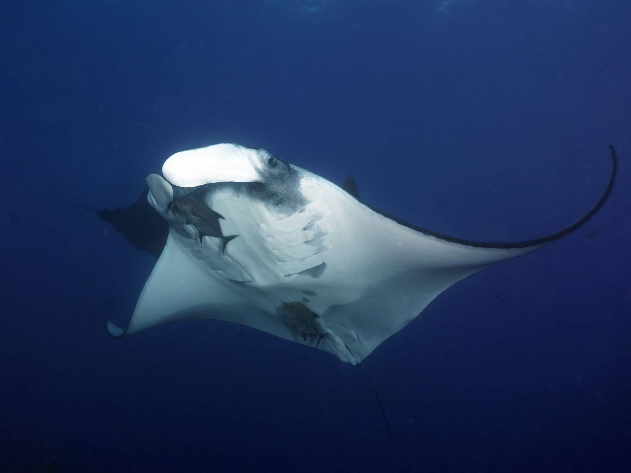 What Diving the Revillagigedos Archipelago Really Looks Like, Part Three