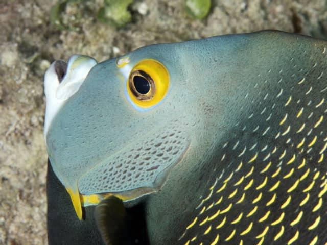 fabulous photo friday returns, fabulous photo friday, fish friends, cozumel